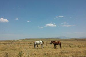 Arménsko a kone