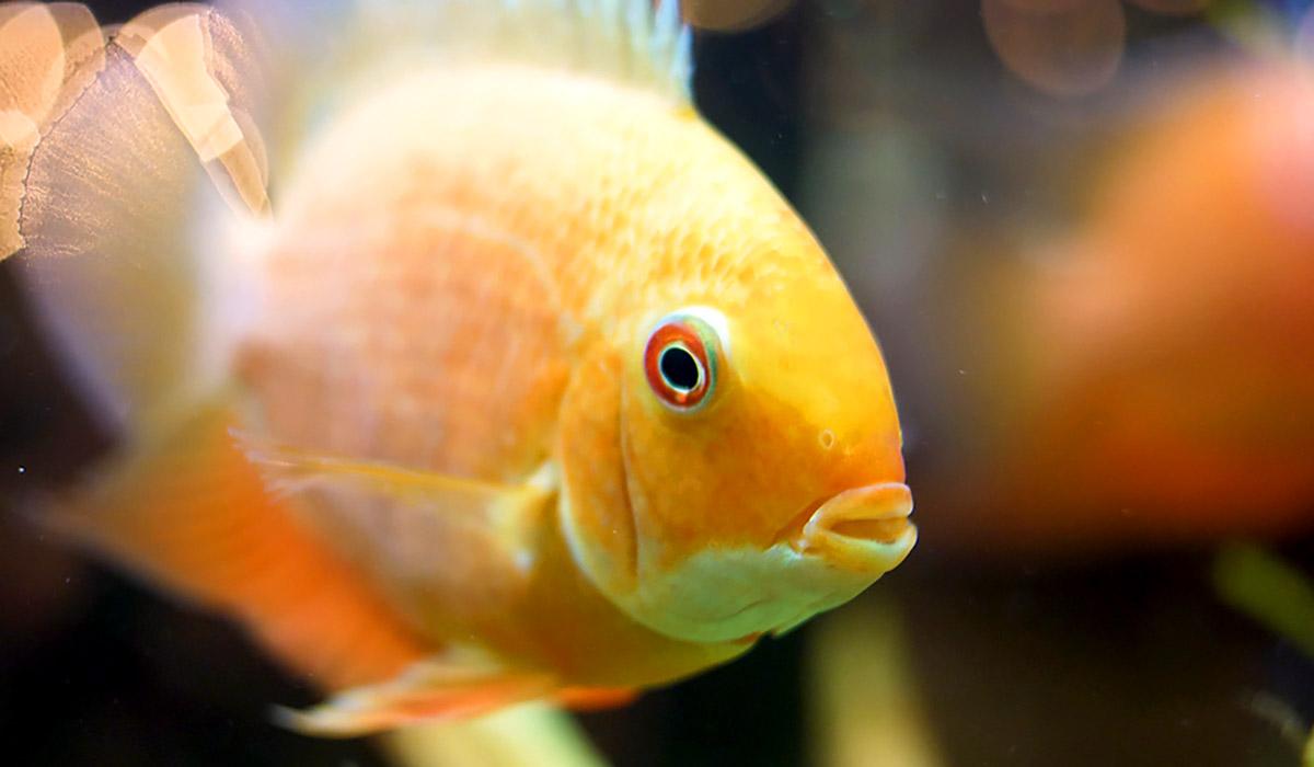 OPŠ 355: Zlatá rybka